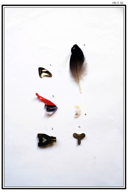 Grafous :: Diseño Gráfico Social, Sostenible y Activista :: Nuevas especies